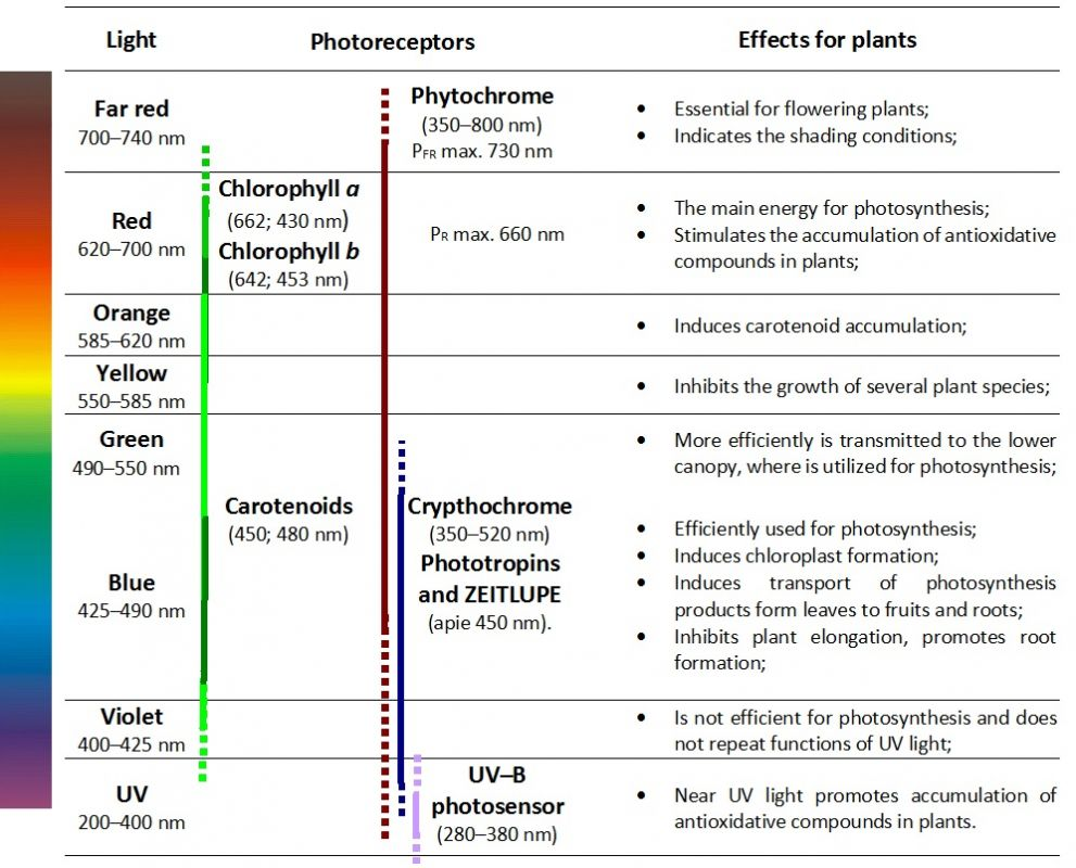 Table 1. Photoreceptors and effects of light colors.