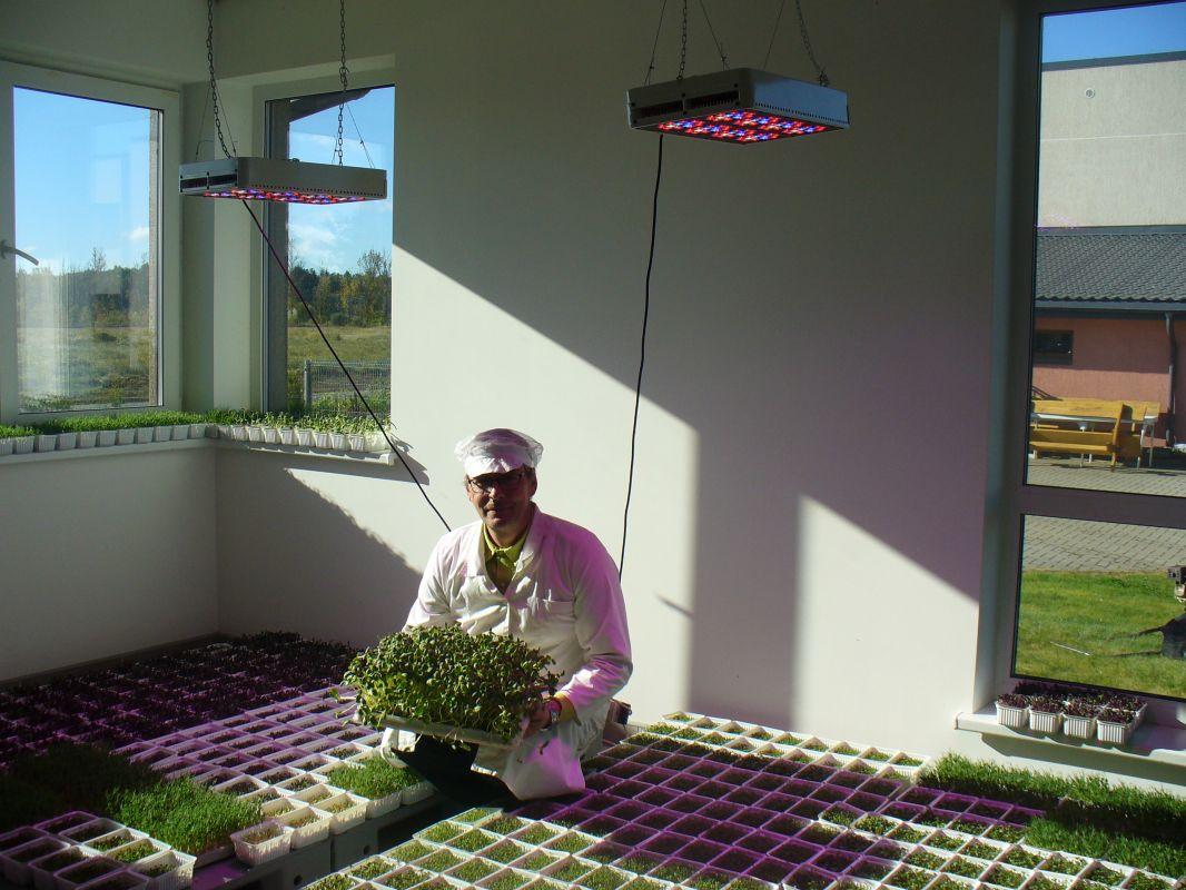 Grower Raimondas Grajauskas and his microgreens