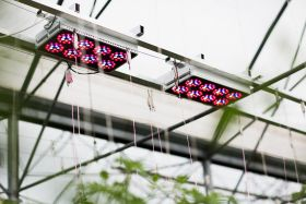 LED augalų apšvietimui – Ar JAU metas?