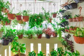 Subalansuota augalų mityba